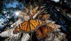 مهاجرت زیبای پرندگان به روایت تصویر