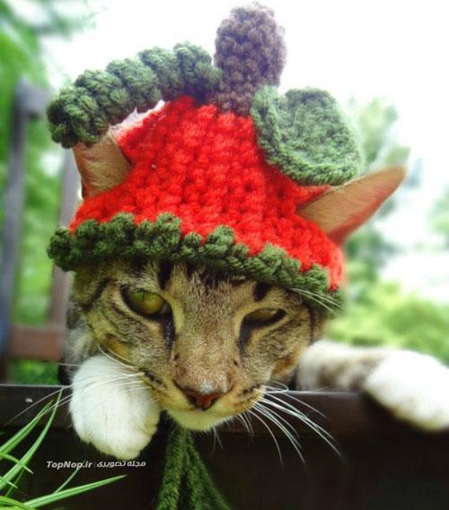 عکس هایی دیدنی از گربه های کلاه قشنگ