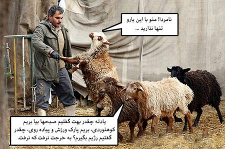 عکس های خنده دار و طنز عید قربان