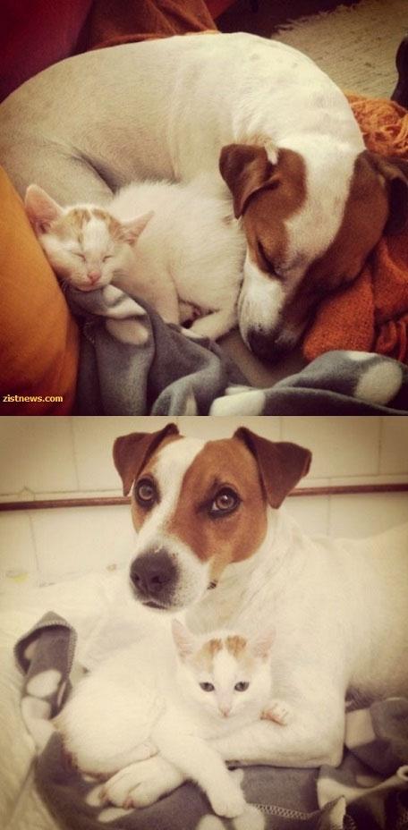 مهربان ترین سگ دنیا (عکس)