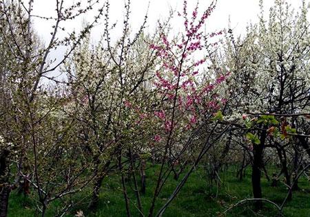 باغرود نیشابور منطقه توریستی زیبا + عکس