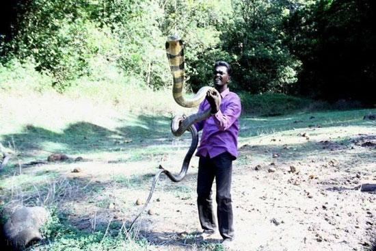 این مرد مار افعی پرورش میدهد (+عکس)