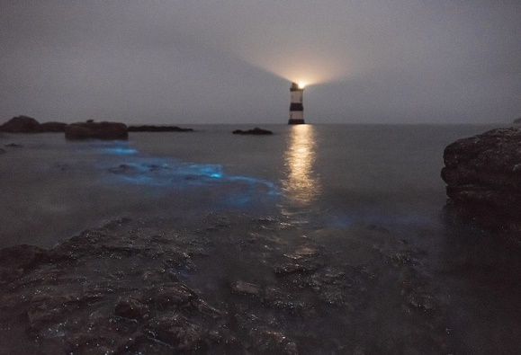 نمایان شدن نورهایی عجیب در زیر آب های کشور ولز