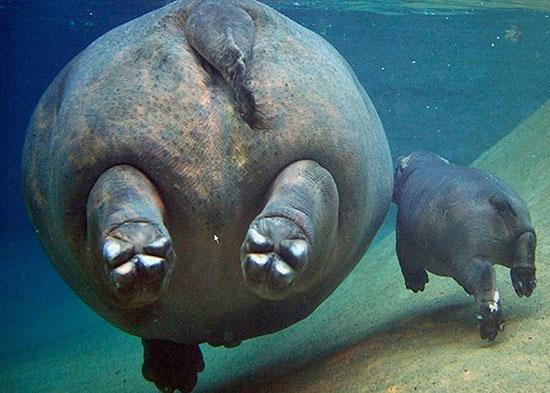 تصاویری از دنیای خارق العاده حیوانات