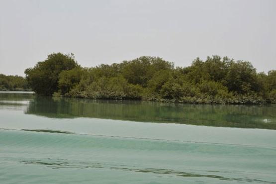 خرچنگ های جزایر ایرانی که گیتار می نوازند (+عکس)