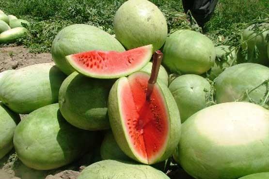 هندوانه به شرط کارد نخرید