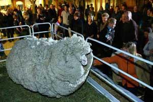 پشمالو ترین گوسفند دنیا پیدا شد (+ عکس)
