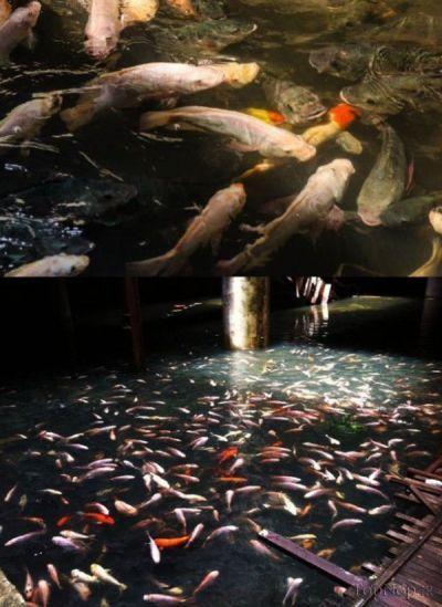 فروشگاهی که تبدیل به مکانی برای ماهی ها شد + عکس