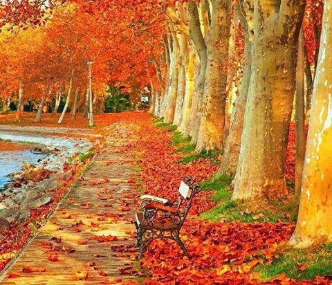 تصاویری از جاذبههای طبیعی گردشگری در پاییز