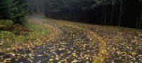 شعرهای عاشقانه پاییز
