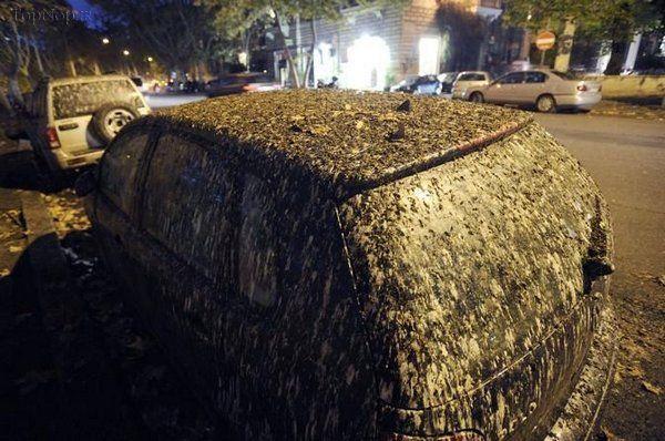 باران مدفوع پرندگان از آسمان ( تصویری)