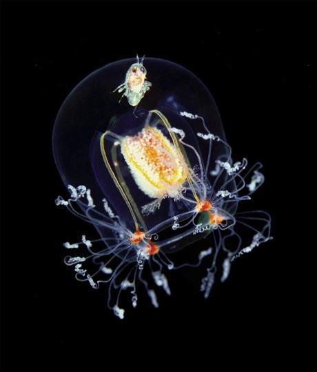 تصاویری از موجودات زنده در اعماق اقیانوس