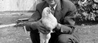 ماجرای عجیب از مرغ سرکندهای که ۱۸ ماه زنده ماند + عکس
