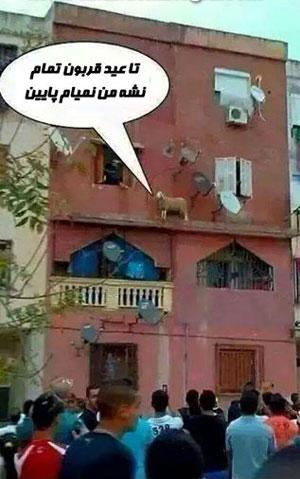 عید قربان شبکه خنده