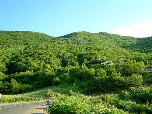 تصاویری از جنگل های ارسباران در آذربایجان