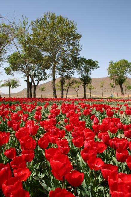 معرفی آبگرم محلات چشمه ای از اعماق طبیعت (عکس)
