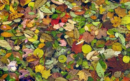 زیباترین شهر دنیا در فصل پاییز کجاست ؟+ تصاویر