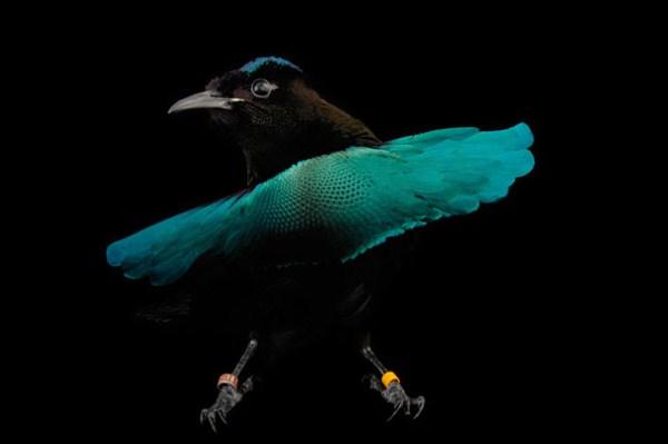 عکس های زیبا و کمیاب از عجیب ترین موجودات خلقت