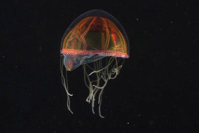 تصاویری از طبیعت و عجایب اعماق اقیانوس اطلس