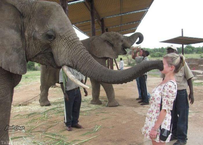 عکسهایی دیدنی از بوس کردن حیوانات
