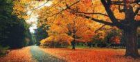 اس ام اس زیبای باران و پاییز (11)