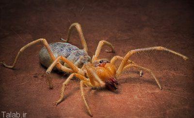 نجات معجزه آسای دو کودک از عنکبوت خطرناک (عکس)