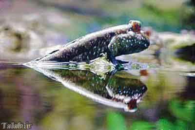 کمیاب ترین گونه های جانوری در کشور