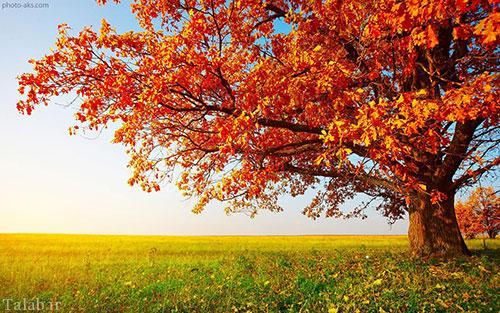 اس ام اس زیبا و خواندنی پاییز