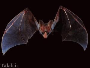 13 دانستنی جالب در مورد خفاش ها