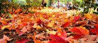 جدیدترین اس ام اس های زیبای پاییز (5)
