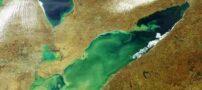 تصاویری از دریاچه ای پر از جلبک در امریکا