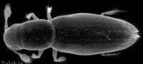 کوچک ترین موجود زنده روی کره زمین (عکس)