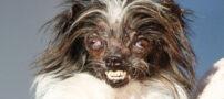 زشت ترین سگ دنیا در کالیفرنیا + عکس