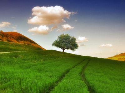 زیبایی بی نهایت زندگی