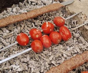 مضررات گوجه فرنگی کبابی