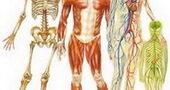 دانستنی های خواندنی و جالب در مورد بدن انسان