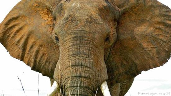 دانستنی های جالب و خواندنی از دنیای حیوانات (2)