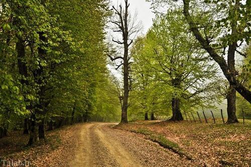 آشنایی با دهکده توریستی و پاییزی مازیچال