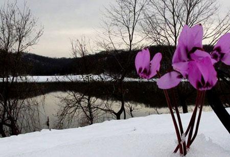 معرفی دریاچه سد سقالکسار + تصاویر