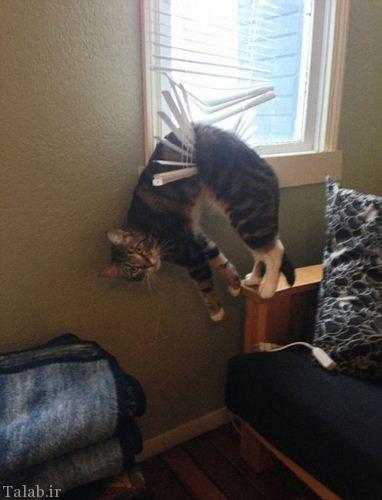 تصاویر دیدنی گربه های دردسر ساز