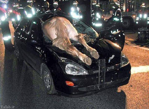 تصاویری از حوادث بسیار جالب و باورنکردنی
