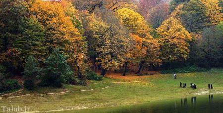 تصاویر زیبا و دیدنی از جنگل النگدره