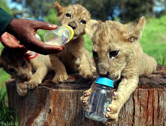 تصاویر حیوانات نمکی و خوشگل
