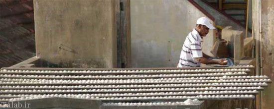 زندگی عجیب مردی با هزاران طوطی (عکس)
