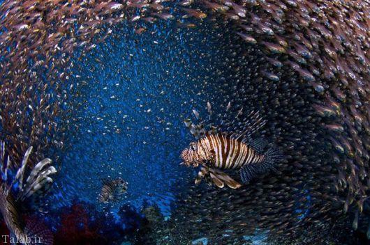 تصاویر عجایب زیبای اقیانوس بی کران