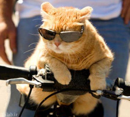 عکس های خنده دار از کارهای بامزه حیوانات