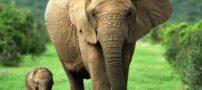طنز باحال نحوه شکار کردن فیل ها