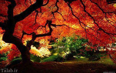 عکاسی در پاییز زیبا با نکات خاص