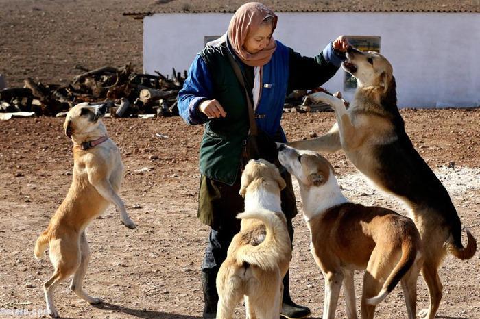 پناهگاه زیبای سگ های بی پناه در تهران + عکس