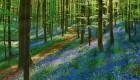 تصاویری از جنگل های آبی گون
